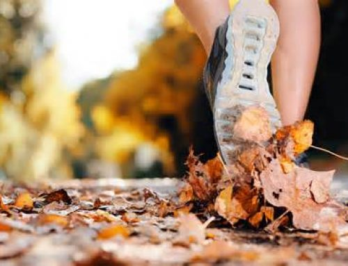 Fall Routine